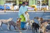 Not Just Cruel But Dangerous For Human Health: PETA On Nagaland Dog Meat Trade