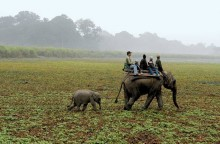 Kaziranga National Park Opens For Tourists After 7 Months