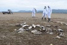 Delhi, Maharashtra Confirm Bird Flu Outbreak