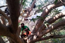 Bizarre Ways Of Sanitising Migrants: Spraying Bleach, Sleeping On Banyan Trees!