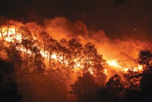 Unchecked Man-Made Wildfires Destroy Massive Forests In India