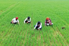 Punjab: Watering A Green Revolution