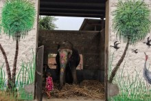 Of Tuskers And Mahouts: The Elephantine Issues Of Jaipur's Elephant Village