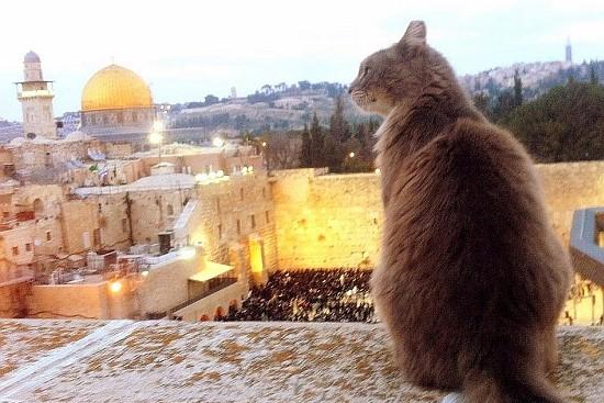 Israel's Feline Question
