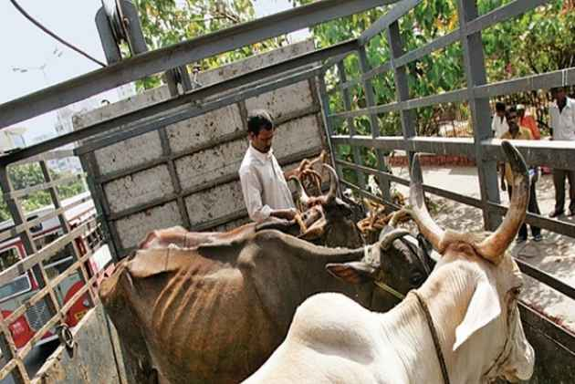 Alwar: Muslim Man Transporting Cows Shot Dead Allegedly By 'Gau Rakshaks'