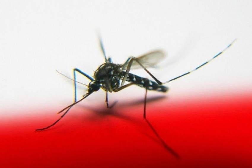 Scientists Detect New Strain of Dengue Virus That Originated In Singapore And Wrecked Havoc In Tamil Nadu And Kerala