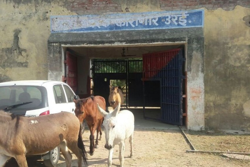 Believe It Or Not: Donkeys, Horses Detained For Damaging Saplings In UP