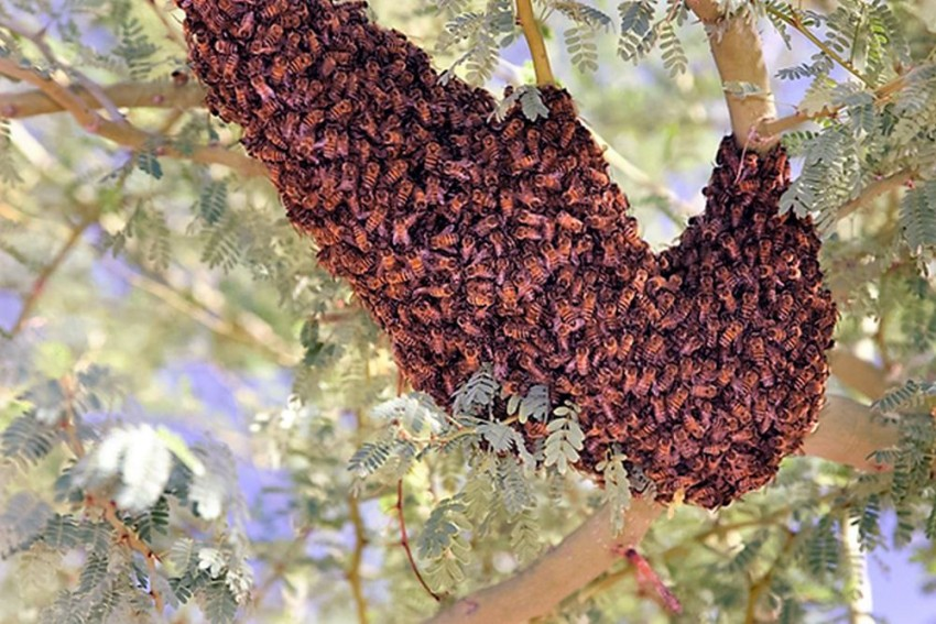Tamil Nadu: Relatives Leave Body And Run For Cover After Bees Attack At Burial Ground