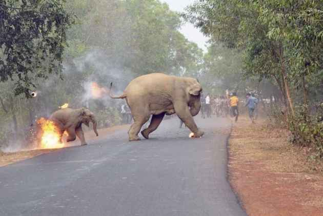 Picture Of Elephant Calf Running For Its Life Wins Photography Award