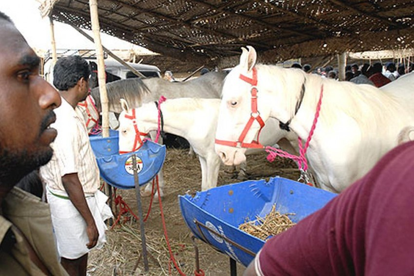 Alarm Bells In West Delhi After Diagnosing Highly Infectious Glanders Disease, Govt Bans Horse Movements