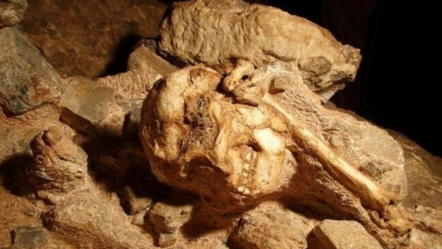 Scientists Find Nine Million Years Old Ape Fossils In Himachal