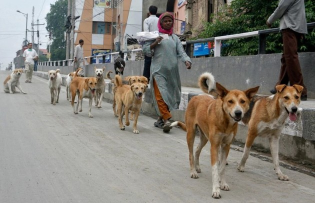 Image result for Dogs' becoming major threat' to wildlife