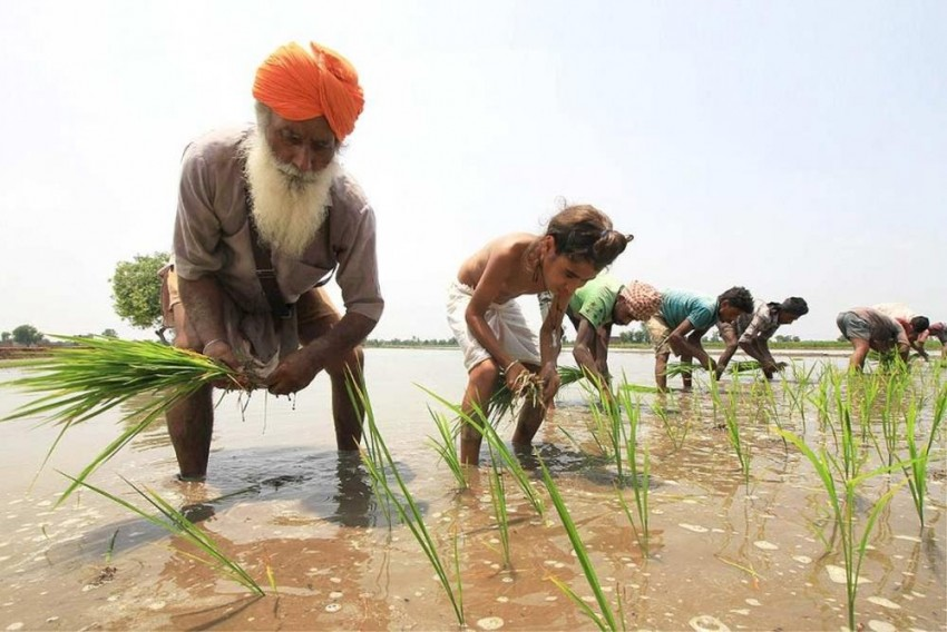 Insurance Companies Made Rs 10,000 Cr Profit Out Of Modi's Crop Insurance Scheme: CSE Report