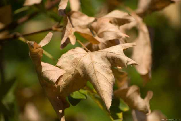 How To Convert Tree Leaves Into Electronic Devices? These Scientists Have The Answer