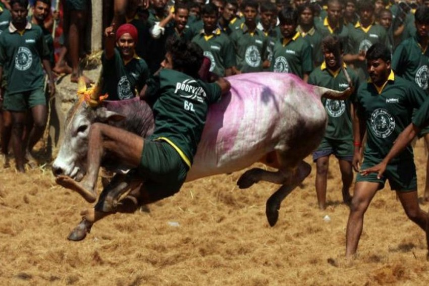 Three People Killed In Jallikattu Event In Last 24 Hours Amid Big Prizes Offered By Leaders