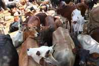 Angry Mob Thrashes Two Men For Allegedly Stealing Cows in UP's Mughalsarai