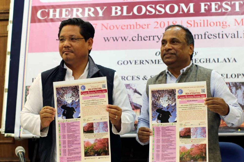 India International Cherry Blossom Festival To Be A Mega Event This Year: Meghalaya CM