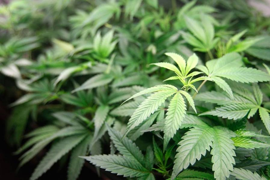 Canada Legalises Possesion, Recreational Use Of Cannabis
