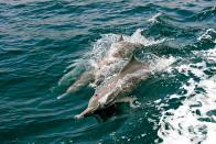 Asia's First Dolphin Research Centre To Commence In Patna