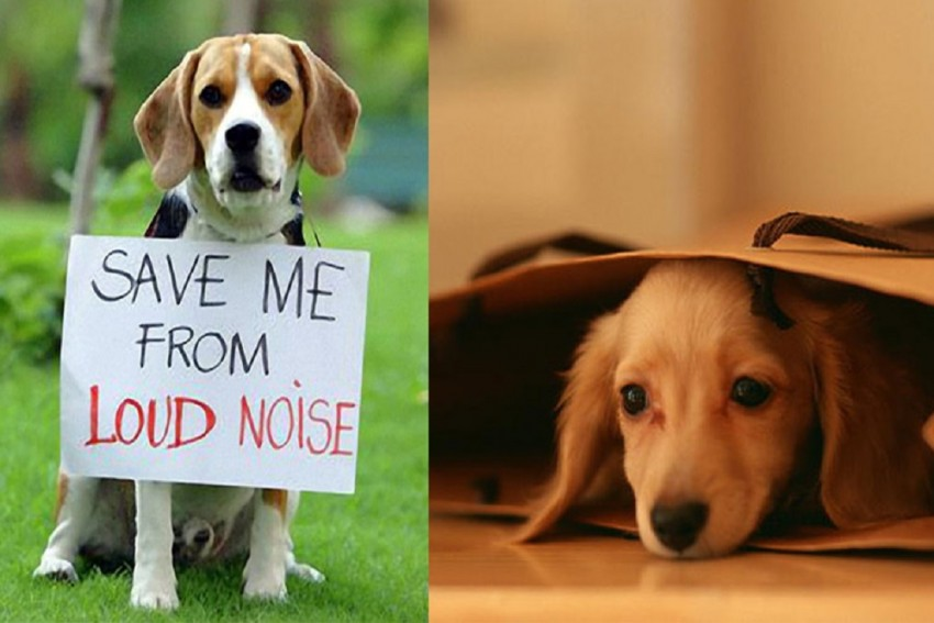 Ways To Take Care Of Pets And Stray Animals During Diwali