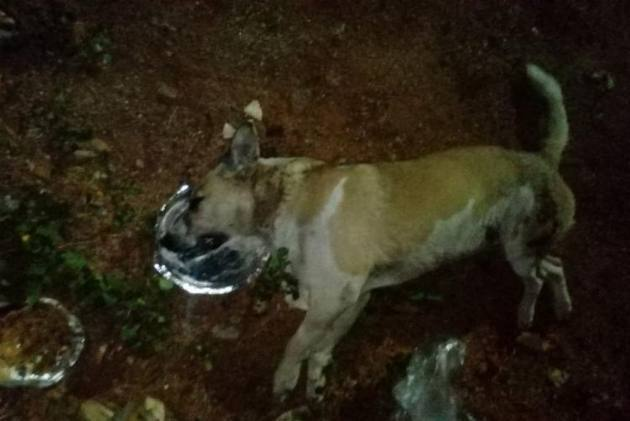 100 Stray Dogs Allegedly Poisoned To Death In Hyderabad Town, Case Registered