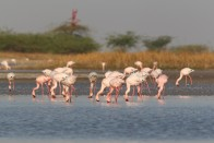 Best Destinations For Birding Holidays In India During Winter