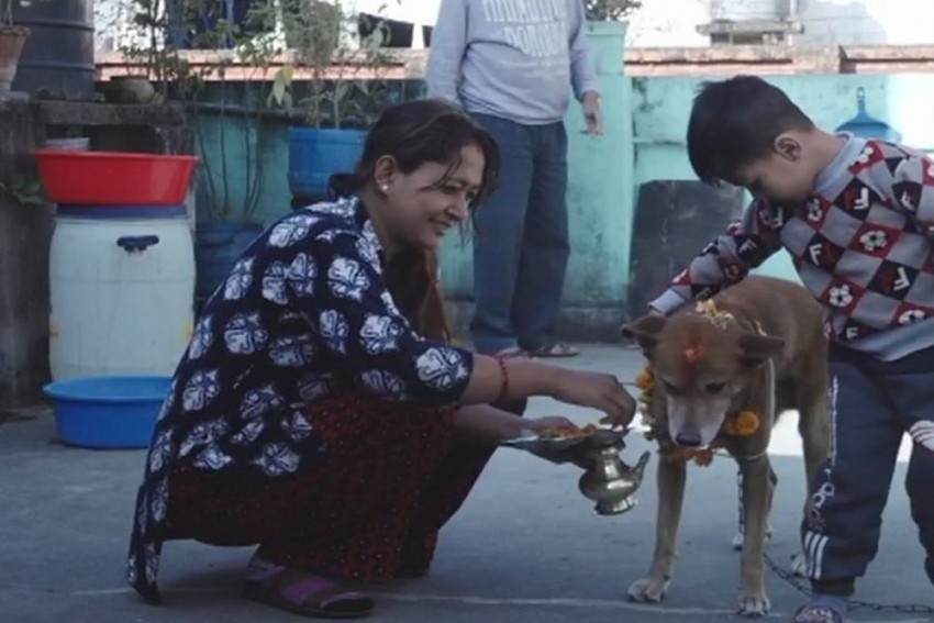'Kukkur Tihar': When Dogs Are Worshipped A Day Ahead Of Diwali