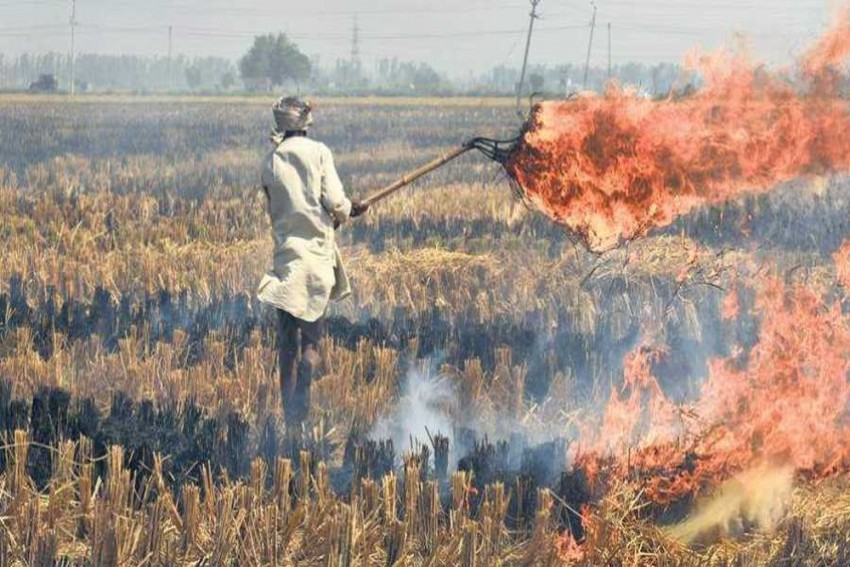 Despite Poor Air Quality, Why Farmers In Punjab, Haryana Continue To Burn Stubble