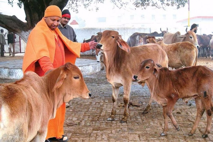 Yogi Directs Officials To Make Immediate Arrangements For Proper Care Of Stray Cows