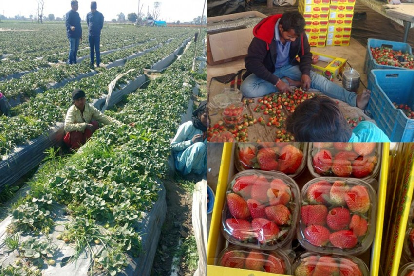 To Harvest Enterprise