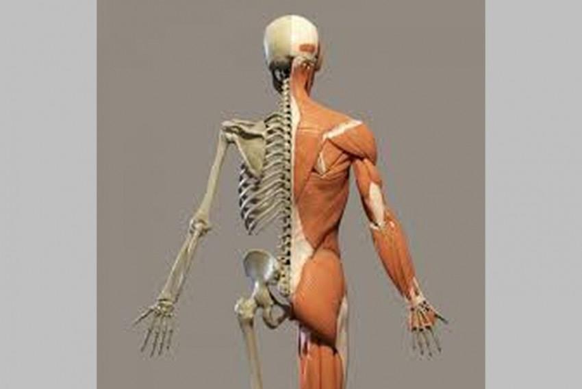 Scientists Identify New Organ In Human Body