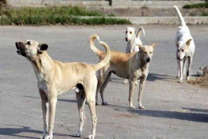 Srinagar: Govt Says Population Of Dogs Decreasing Even As Dog Bite Cases Go Up