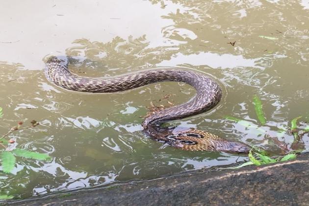 Kerala Floods: Venomous Snakes Greet Residents Returning Home