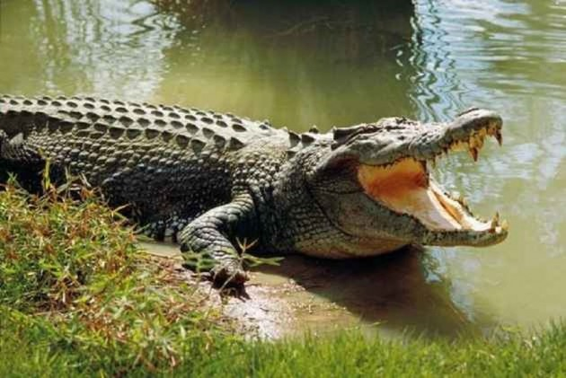 Chhattisgarh: Villagers Mourn 130-Year-Old 'Protector' Crocodile's Death, Take Out Funeral Procession