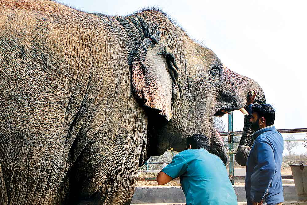 Photo Feature | A Hospital In Mathura For Elephants Rescued From Captivity