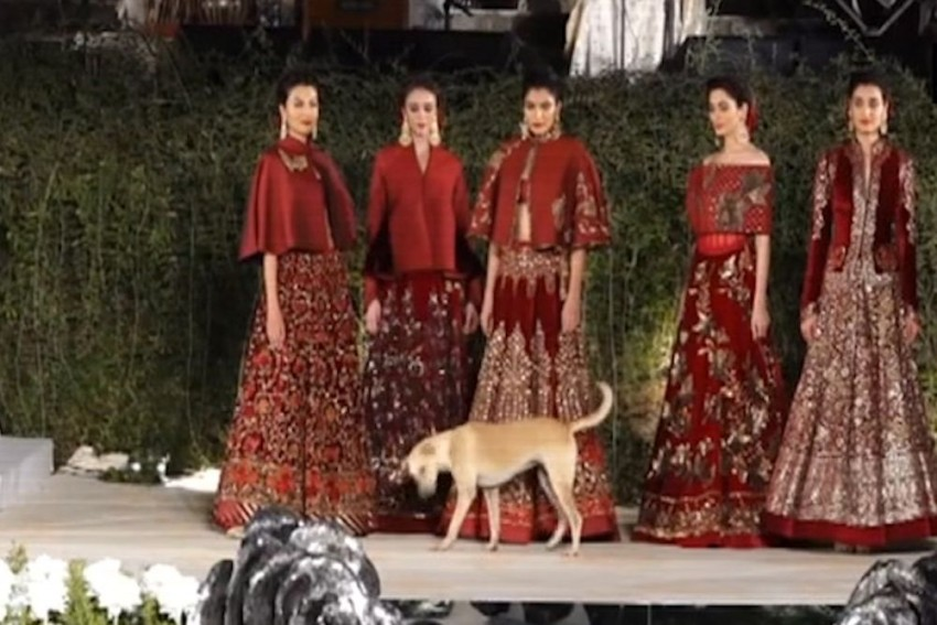 Watch: Street Dog Steals Limelight At Rohit Bal's Fashion Show In Mumbai