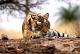 India's Best Wildlife Trip, Ranthambore