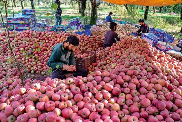 'Azadi', 'Burhan Wani' Written On Apples From Kashmir, Police Starts Probe