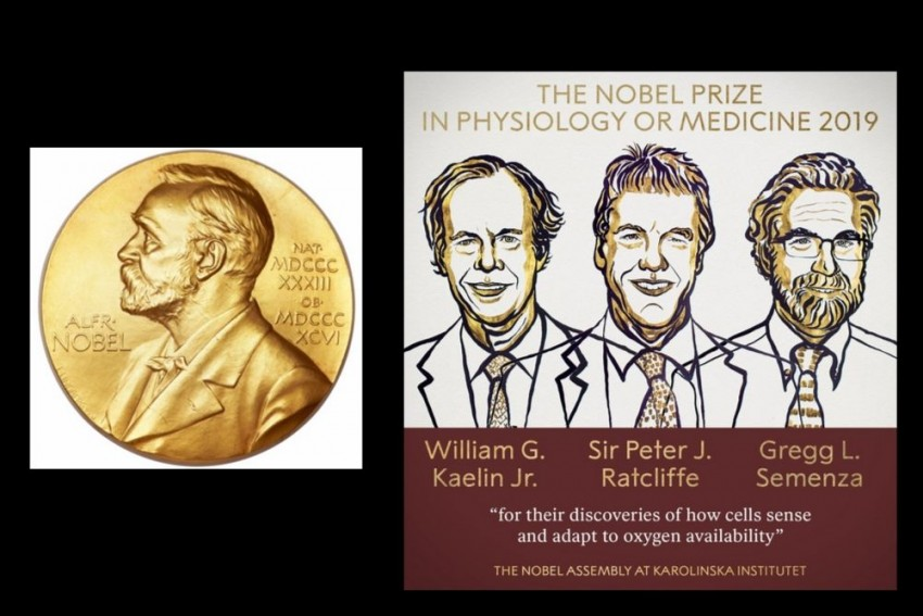 3 Scientists Awarded Nobel Prize In Medicine For Cell Research