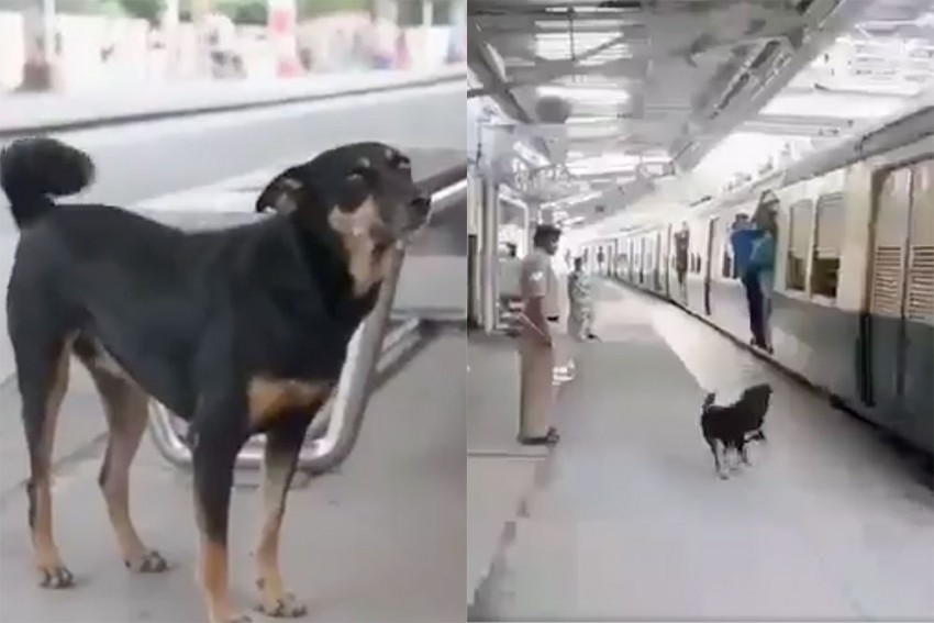 Beware Of This Dog If You Are Violating Rules At Chennai Railway Station