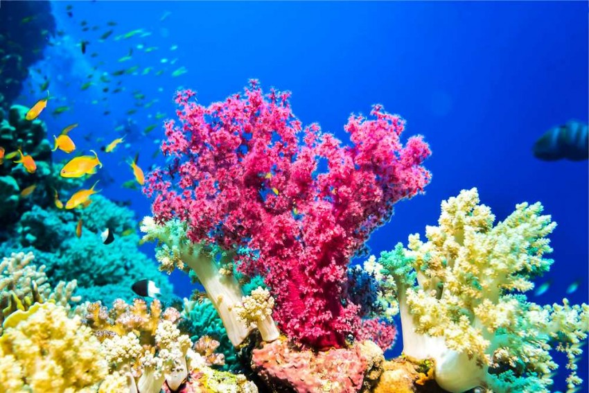 Marine Life Under Threat As Oceans Run Out Of Oxygen Due To Climate Change
