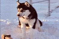Dog Named Donald Trump Wasn't Killed Over Politics: US Official
