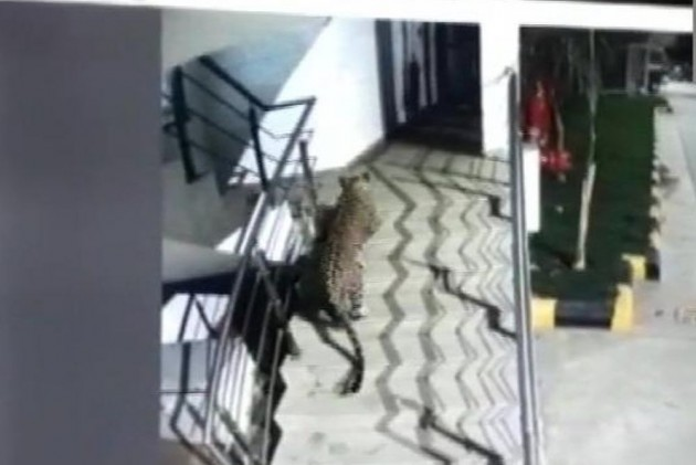 Panther Spotted At Shopping Mall, Hotel In Maharashtra's Thane
