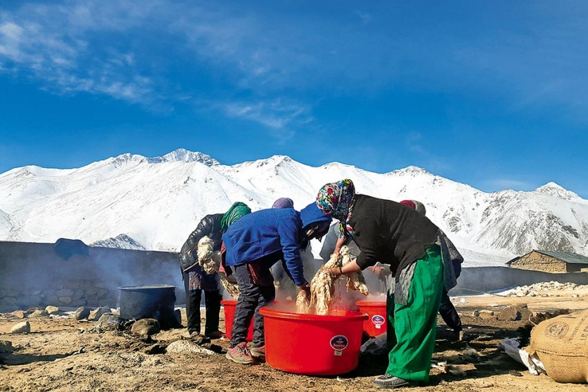 Pashmina's Purple Patch: Youngsters Are Flocking Home To Revitalise Weaves Of Ladakh