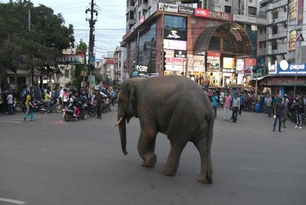 Wild Elephant Enters Guwahati City, Tranquilised By Forest Officials