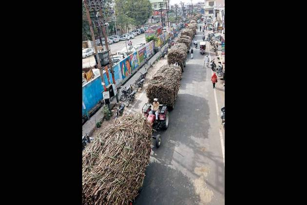 Bitter-Sweet Harvest: Dues To Sugarcane Farmers Rise To Rs 25,000 Crore
