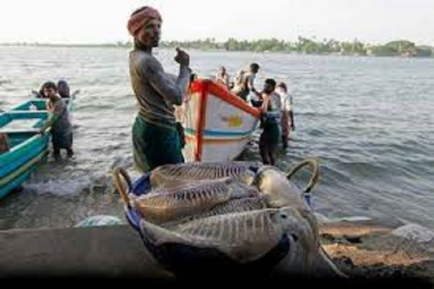 18 Indian Fishermen Arrested In Sri Lanka For Illegal Poaching