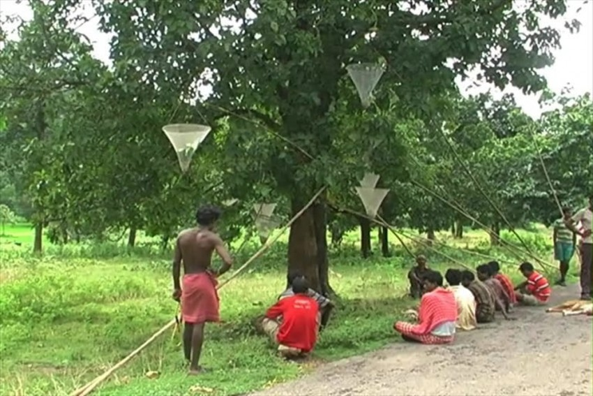 Development, 'Unfulfilled' Promises To Decide Fate Of Candidates In Tribal Bengal