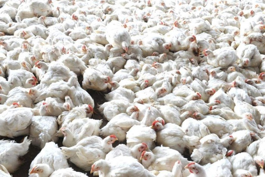 First Bird Flu Death Case Reported In Nepal