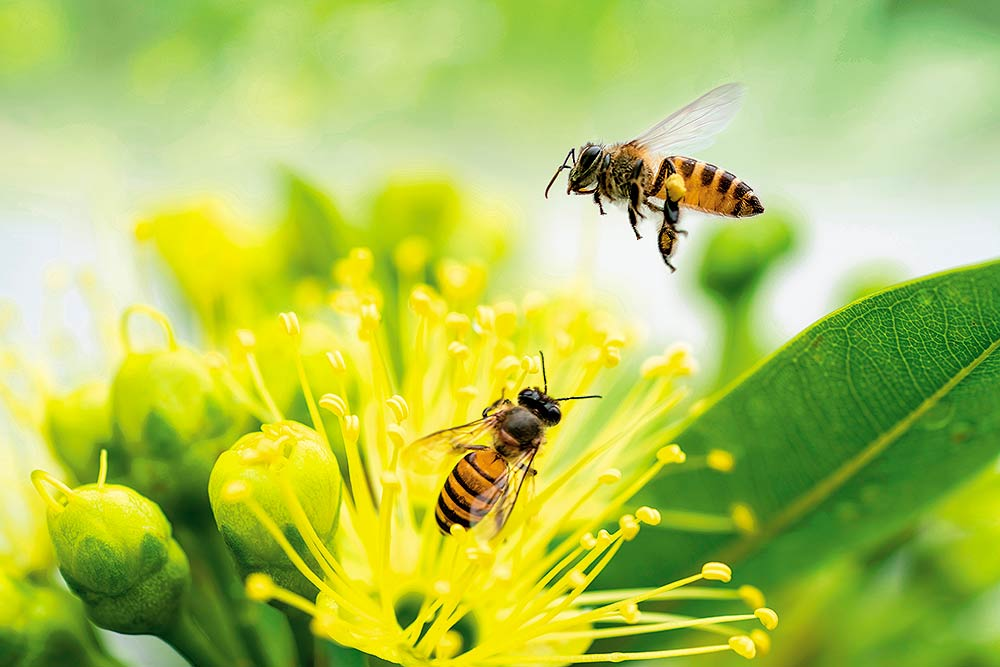 Pollination, Lack Of